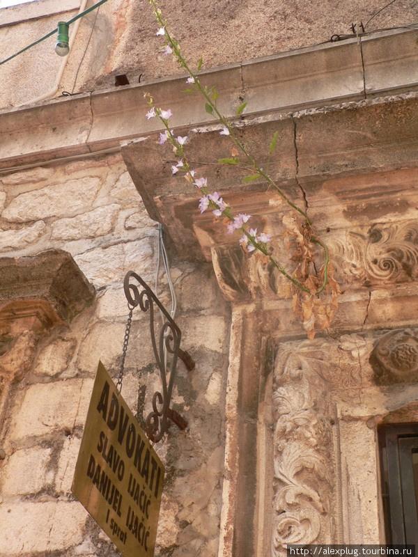 Разгар лета. Температура воздуха +42С. Чем питается и почему цветёт это растение?