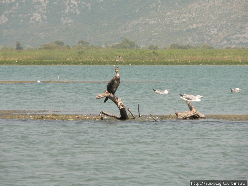 Бакланы, чайки, крачки, цапли абсолютно не боятся лодок с туристами.
