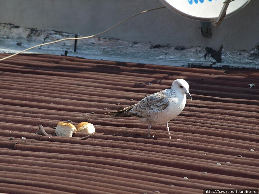 Соседи по завтраку