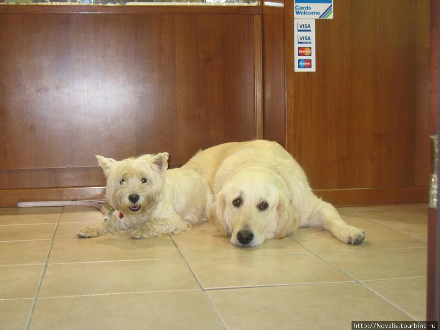 продаются красивые собачки, к оплате принимаются виза и мастеркард