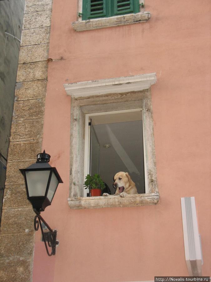 сосед в доме напротив