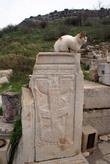 Кошка на руинах