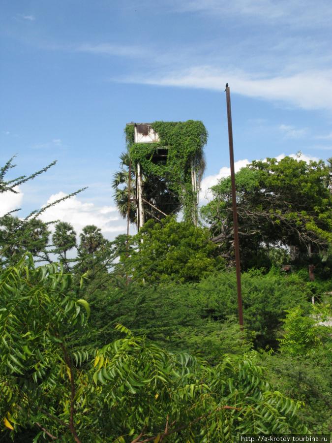 Так тропическая зелень зарастает все постройки, если ее не счищать