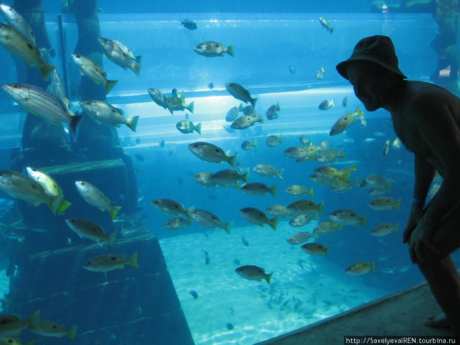 Стайки блестящих рыбок.