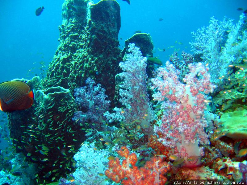фото море с названием в рыбы андаманском