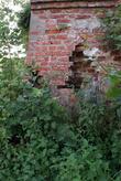 Заросли и руины