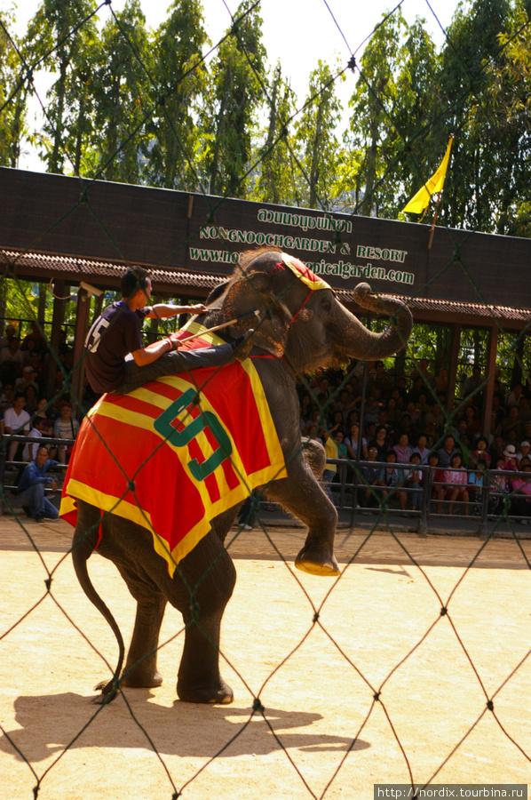 Шоу слонов в парке Нонг-Нуч лучшее.
