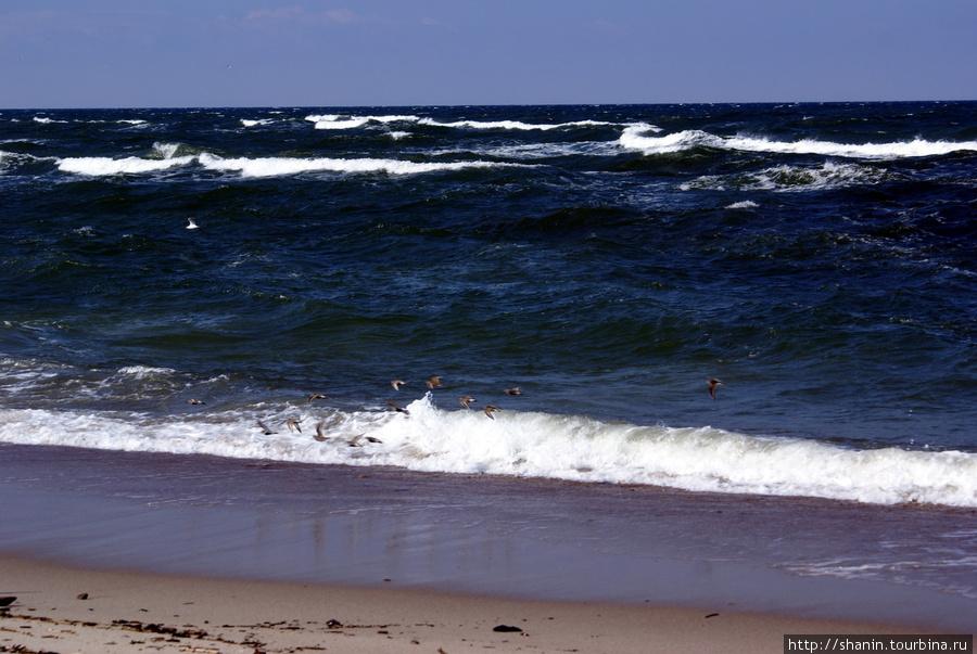 Балтийское море у Балтийской косы Балтийск, Россия