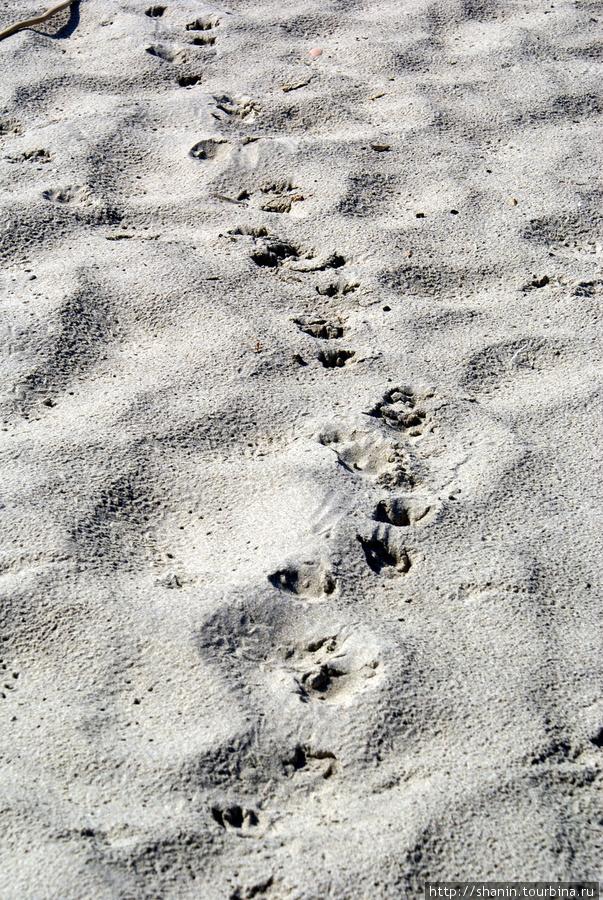 Следы на песке Балтийск, Россия