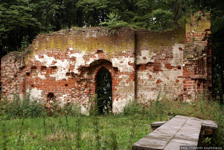 На руинах кирхи у замка Бальга Калининградская область, Россия