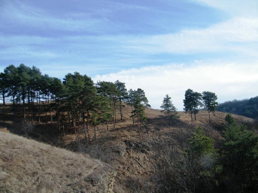 Пейзажи в парке