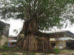 Деревья своими корнями, за десятки лет, разрушат любую стену, которую не доломали военные действия
