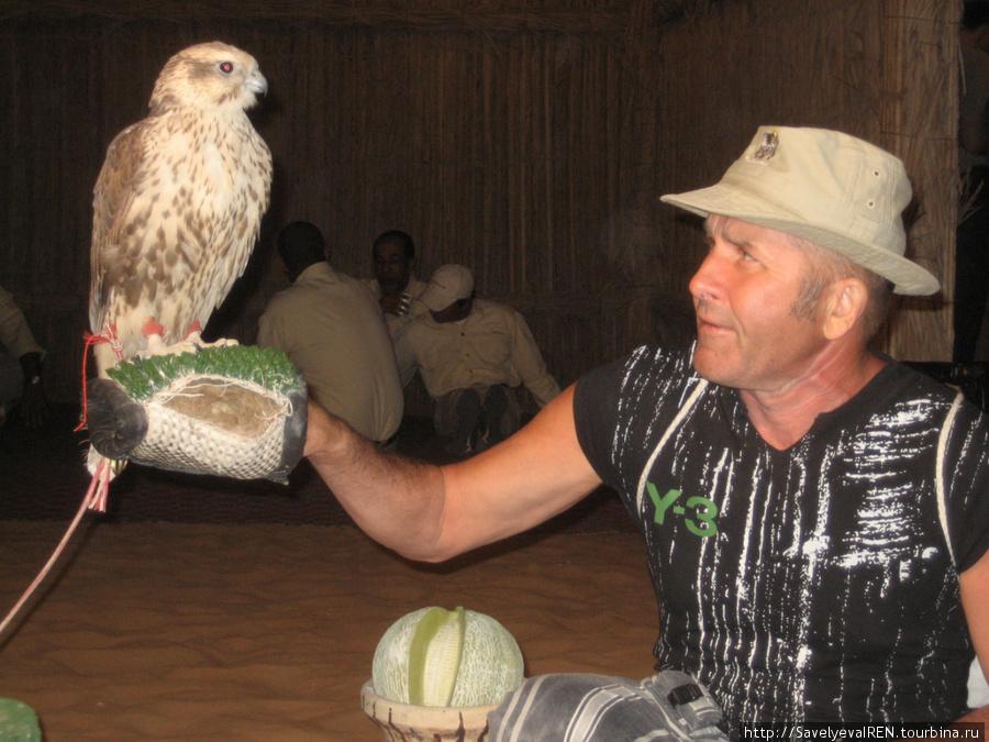 В деревне бедуинов развлечения разные. Ловчий сокол.