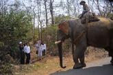 егерь на слоне