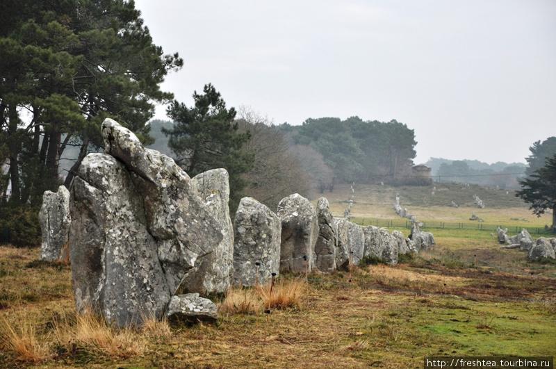 В линии Кермарио (alignements de Kermario) — целые аллеи каменных глыб, уходящие за горизонт. Вот такое наследие