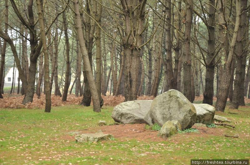 Кроме открытых пространств, камни то тут, то там возникают среди леса. Какой великан ими ворочал?..