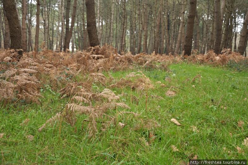Вот они, Карнакские леса, в пору межсезонья — то ли поздняя осень, то ли ранняя весна...