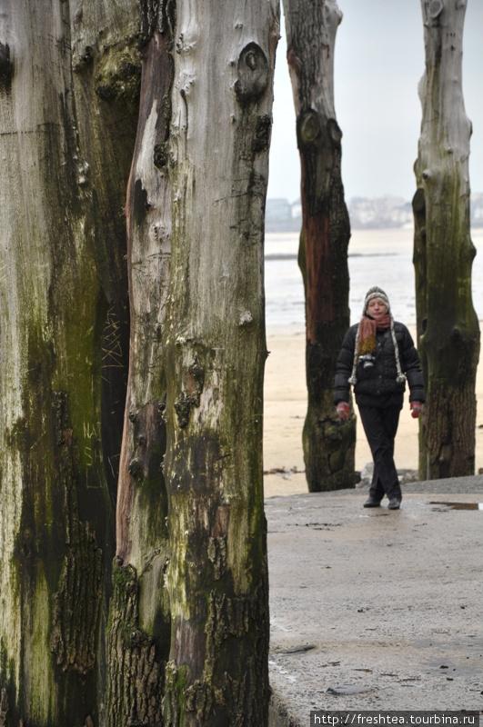 Лишь оказавшись рядом с вереницей бревен-волнорезов, можно оценить усилия по защите города от водной стихии.