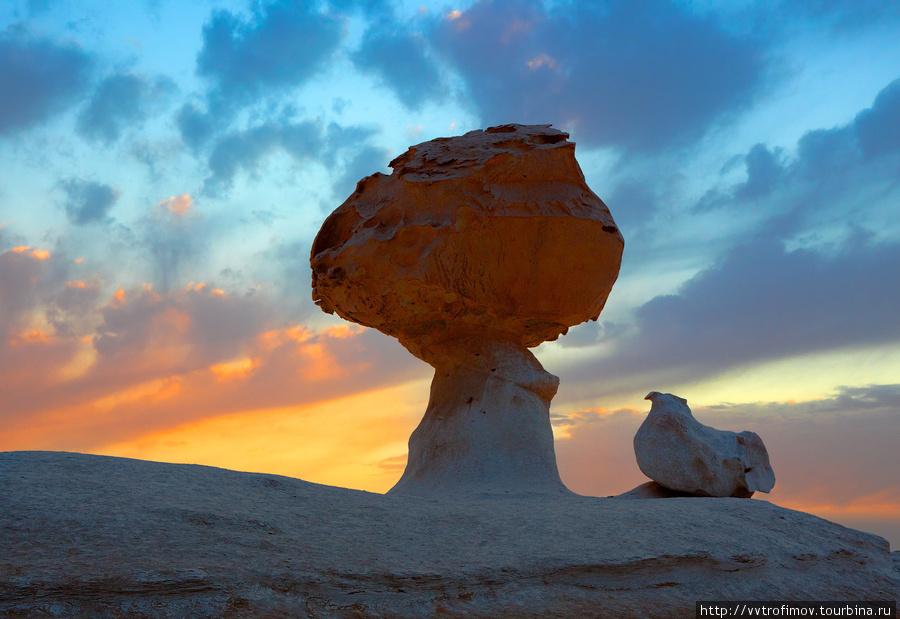 Chicken & mushroom Египет