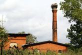Аисты на кирпичной трубе в Полесске