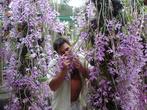 Опьянённый ароматом орхидей