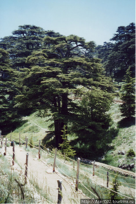 крытом картодроме ливанский кедр в турции фото выбор