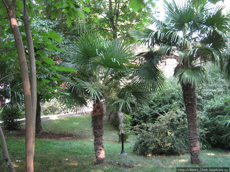 фото пальмы крыма часа